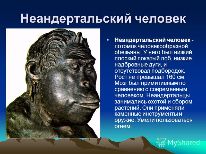Неандертальский человек Неандертальский человек - потомок человекообразной обезьяны. У него был низкий, плоский покатый лоб, низкие надбровные дуги, и отсутствовал подбородок. Рост не превышал 160 см. Мозг был примитивным по сравнению с современным ч