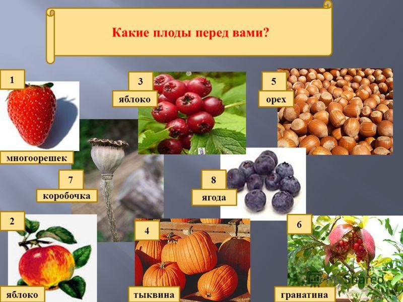 Какие плоды перед вами? 4 2 7 5 1 8 6 3 многоорешек яблоко тыквина орех гранатина коробочка ягода