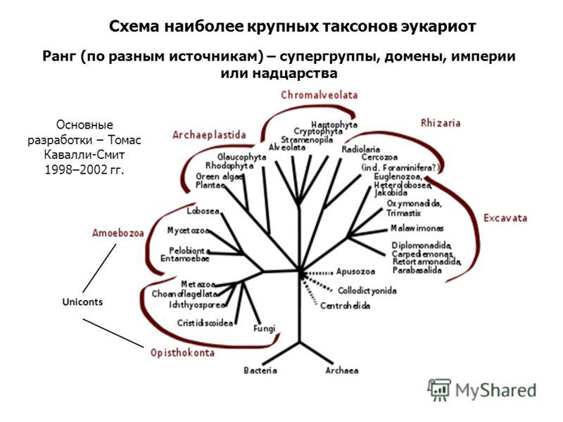 Uniconts Схема наиболее крупных таксонов эукариот Основные разработки – Томас Кавалли-Смит 1998–2002 гг. Ранг (по разным источникам) – супергруппы, домены, империи или надцарства