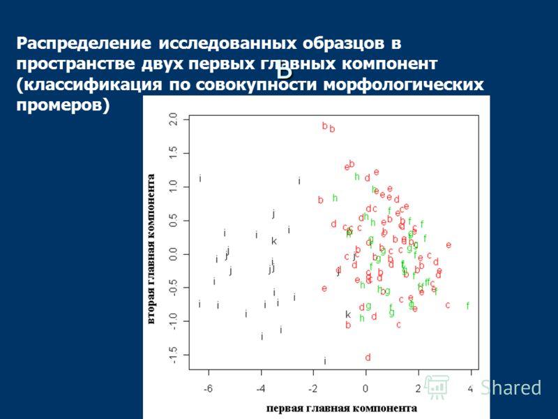 Распределение исследованных образцов в пространстве двух первых главных компонент (классификация по совокупности морфологических промеров) ь