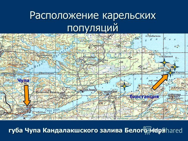 биостанция Чупа Расположение карельских популяций губа Чупа Кандалакшского залива Белого моря