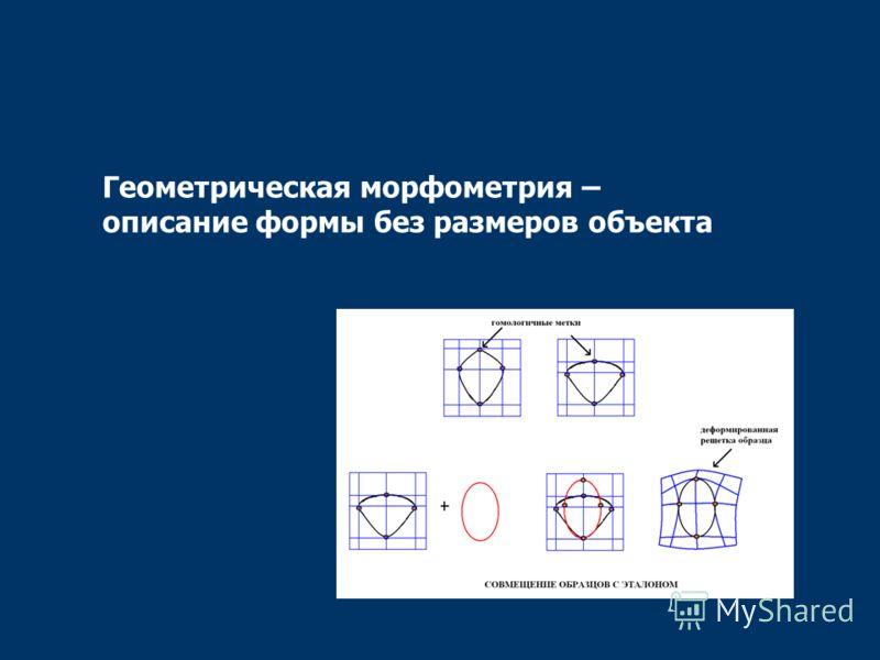 Геометрическая морфометрия – описание формы без размеров объекта