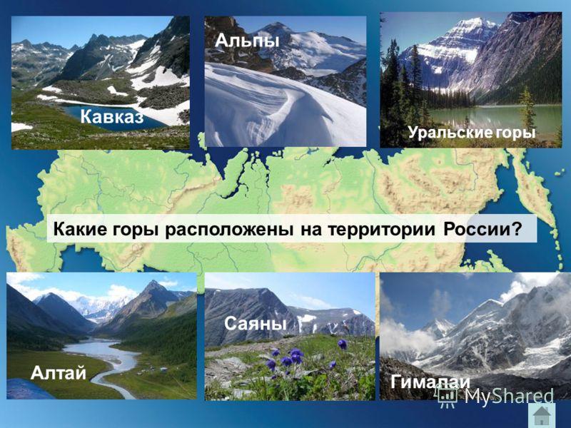 Кавказ Альпы Уральские горы Какие горы расположены на территории России? Алтай Саяны Гималаи
