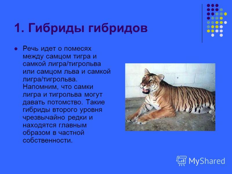 1. Гибриды гибридов Речь идет о помесях между самцом тигра и самкой лигра/тигрольва или самцом льва и самкой лигра/тигрольва. Напомним, что самки лигра и тигрольва могут давать потомство. Такие гибриды второго уровня чрезвычайно редки и находятся гла
