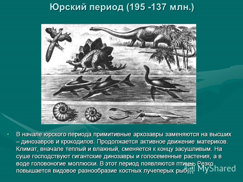 Юрский период (195 -137 млн.) В начале юрского периода примитивные архозавры заменяются на высших – динозавров и крокодилов. Продолжается активное движение материков. Климат, вначале теплый и влажный, сменяется к концу засушливым. На суше господствую