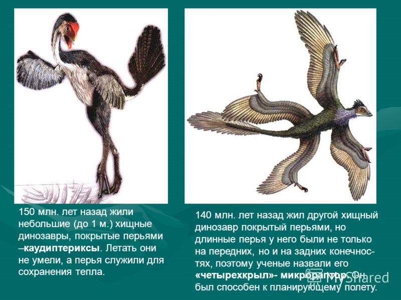 150 млн. лет назад жили небольшие (до 1 м.) хищные динозавры, покрытые перьями –каудиптериксы. Летать они не умели, а перья служили для сохранения тепла. 140 млн. лет назад жил другой хищный динозавр покрытый перьями, но длинные перья у него были не