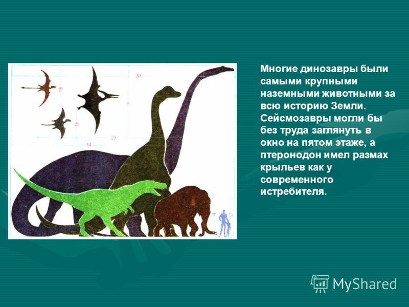 Многие динозавры были самыми крупными наземными животными за всю историю Земли. Сейсмозавры могли бы без труда заглянуть в окно на пятом этаже, а птеронодон имел размах крыльев как у современного истребителя.