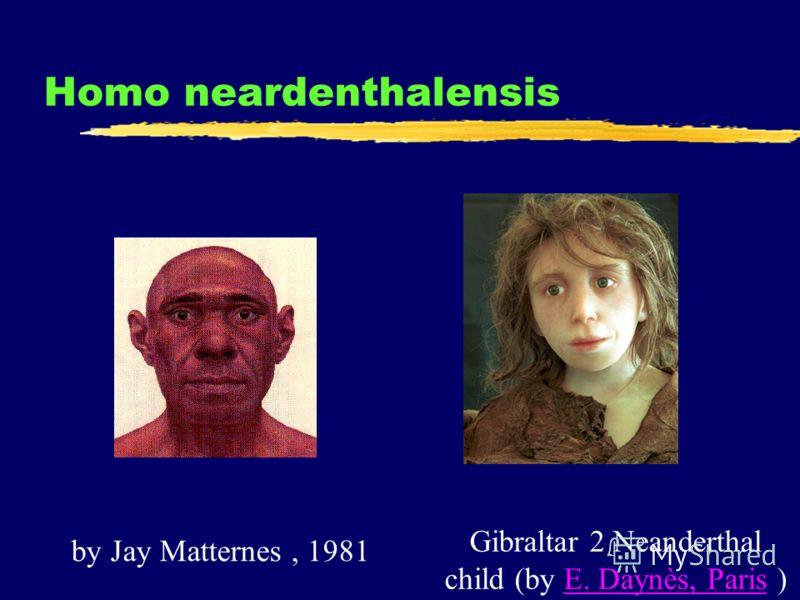 Homo neardenthalensis Gibraltar 2 Neanderthal child (by E. Daynès, Paris )E. Daynès, Paris by Jay Matternes, 1981