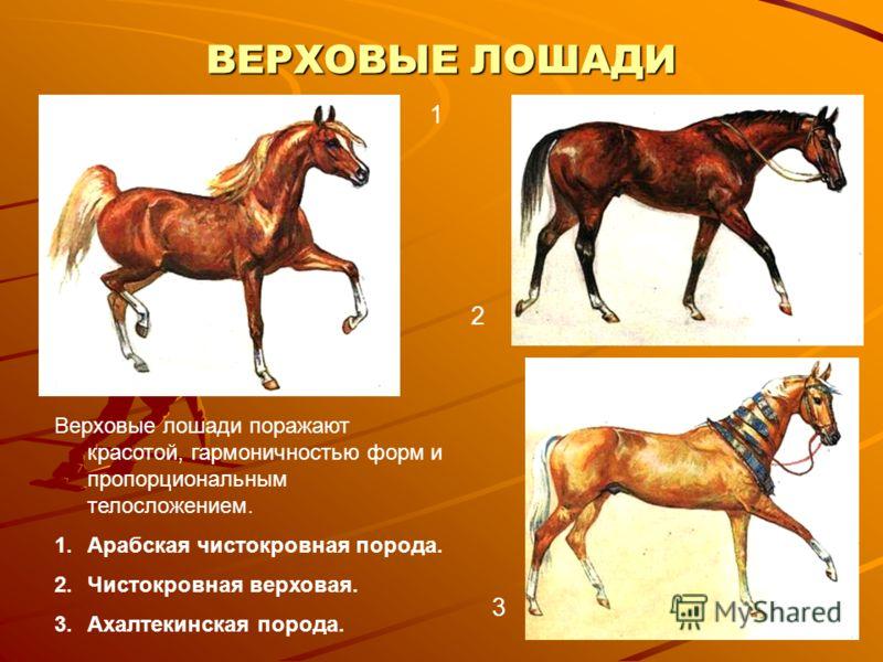 ВЕРХОВЫЕ ЛОШАДИ 1 2 3 Верховые лошади поражают красотой, гармоничностью форм и пропорциональным телосложением. 1.Арабская чистокровная порода. 2.Чистокровная верховая. 3.Ахалтекинская порода.