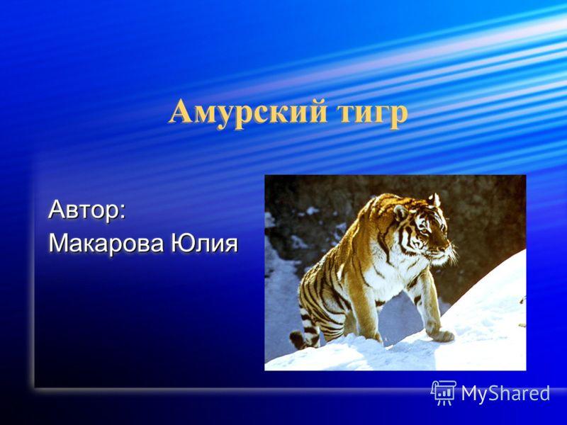 Амурский тигр Автор: Макарова Юлия Автор: