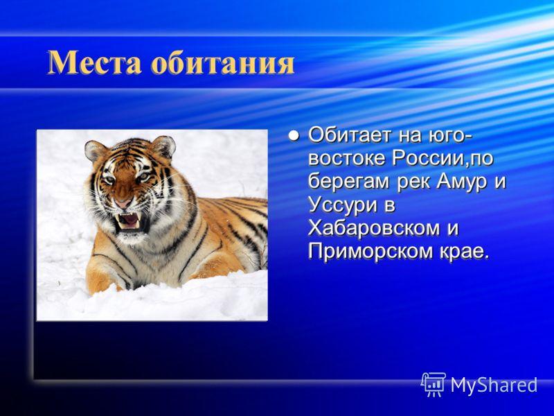 Места обитания Обитает на юго- востоке России,по берегам рек Амур и Уссури в Хабаровском и Приморском крае.