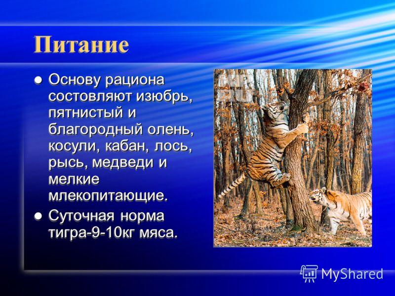 Питание Основу рациона состовляют изюбрь, пятнистый и благородный олень, косули, кабан, лось, рысь, медведи и мелкие млекопитающие. Основу рациона состовляют изюбрь, пятнистый и благородный олень, косули, кабан, лось, рысь, медведи и мелкие млекопита