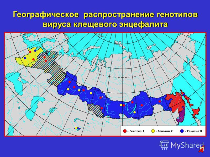 Географическое распространение генотипов вируса клещевого энцефалита