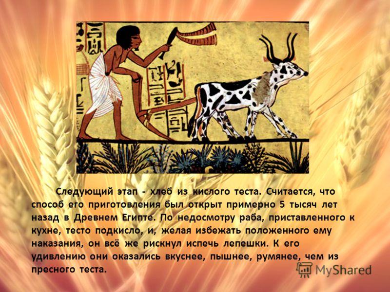 Следующий этап - хлеб из кислого теста. Считается, что способ его приготовления был открыт примерно 5 тысяч лет назад в Древнем Египте. По недосмотру раба, приставленного к кухне, тесто подкисло, и, желая избежать положенного ему наказания, он всё же
