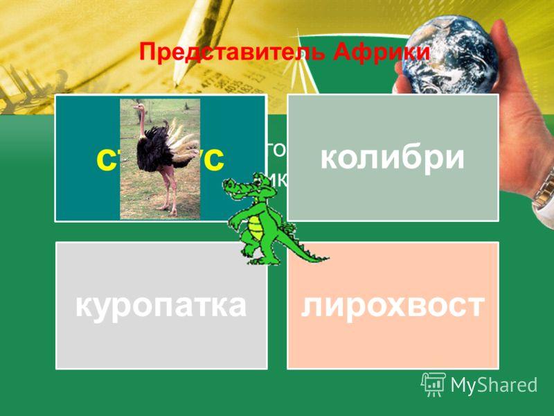 Из предложенного списка, выберите обитателей Африки страусколибри куропаткалирохвост страус Представитель Африки