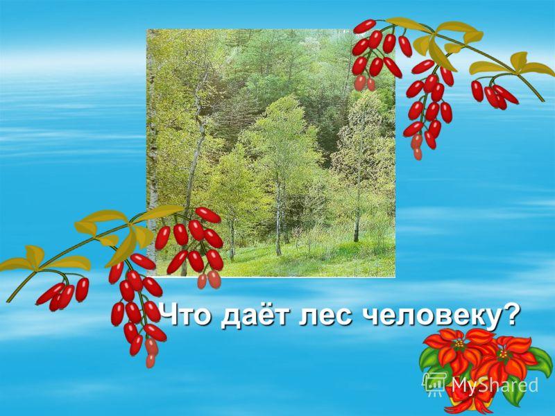 Что даёт лес человеку? Что даёт лес человеку?