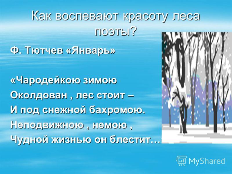 Ф. Тютчев «Январь» «Чародейкою зимою Околдован, лес стоит – И под снежной бахромою. Неподвижною, немою, Чудной жизнью он блестит…» Как воспевают красоту леса поэты?