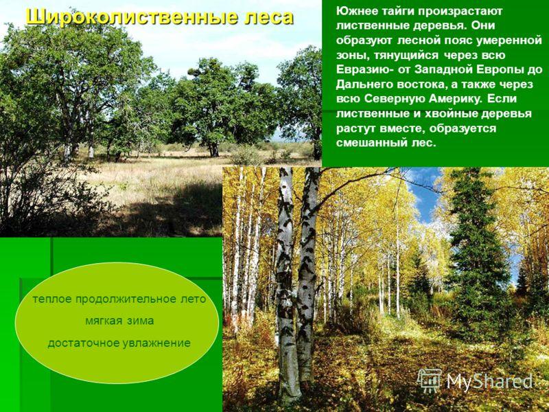 Южнее тайги произрастают лиственные деревья. Они образуют лесной пояс умеренной зоны, тянущийся через всю Евразию- от Западной Европы до Дальнего востока, а также через всю Северную Америку. Если лиственные и хвойные деревья растут вместе, образуется
