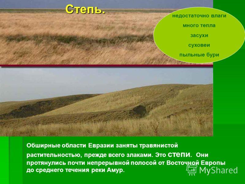 Обширные области Евразии заняты травянистой растительностью, прежде всего злаками. Это степи. Они протянулись почти непрерывной полосой от Восточной Европы до среднего течения реки Амур. недостаточно влаги много тепла засухи суховеи пыльные буриСтепь