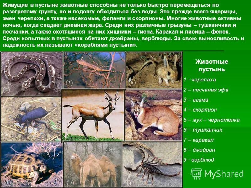 Животные пустынь 1 - черепаха 2 – песчаная эфа 3 – агама 4 – скорпион 5 – жук – чернотелка 6 – тушканчик 7 – каракал 8 – джейран 9 - верблюд Живущие в пустыне животные способны не только быстро перемещаться по разогретому грунту, но и подолгу обходит