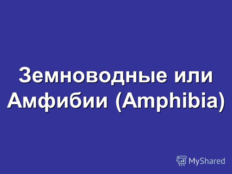 Земноводные или Амфибии (Amphibia)