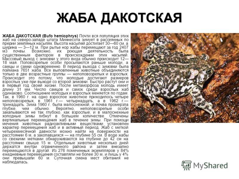 ЖАБА ДАКОТСКАЯ ЖАБА ДАКОТСКАЯ (Bufo hemiophrys) Почти вся популяция этих жаб на северо-западе штата Миннесота зимует в рассеянных по прерии земляных н