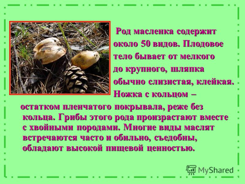 Род масленка содержит Род масленка содержит около 50 видов. Плодовое около 50 видов. Плодовое тело бывает от мелкого тело бывает от мелкого до крупного, шляпка до крупного, шляпка обычно слизистая, клейкая. обычно слизистая, клейкая. Ножка с кольцом