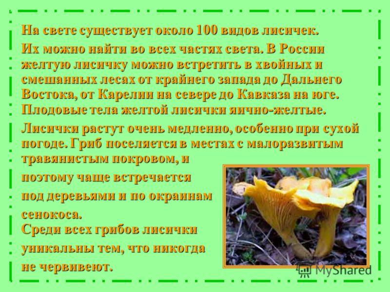 На свете существует около 100 видов лисичек. Их можно найти во всех частях света. В России желтую лисичку можно встретить в хвойных и смешанных лесах от крайнего запада до Дальнего Востока, от Карелии на севере до Кавказа на юге. Плодовые тела желтой