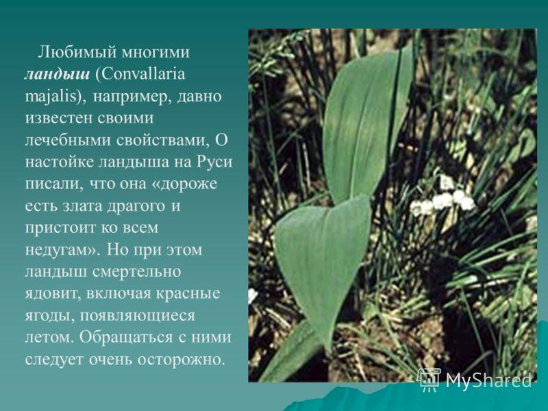 Любимый многими ландыш (Convallaria majalis), например, давно известен своими лечебными свойствами, О настойке ландыша на Руси писали, что она «дороже есть злата драгого и пристоит ко всем недугам». Но при этом ландыш смертельно ядовит, включая красн