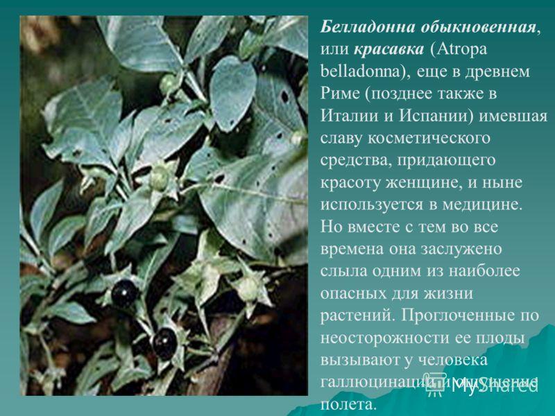 Белладонна обыкновенная, или красавка (Atropa belladonna), еще в древнем Риме (позднее также в Италии и Испании) имевшая славу косметического средства, придающего красоту женщине, и ныне используется в медицине. Но вместе с тем во все времена она зас