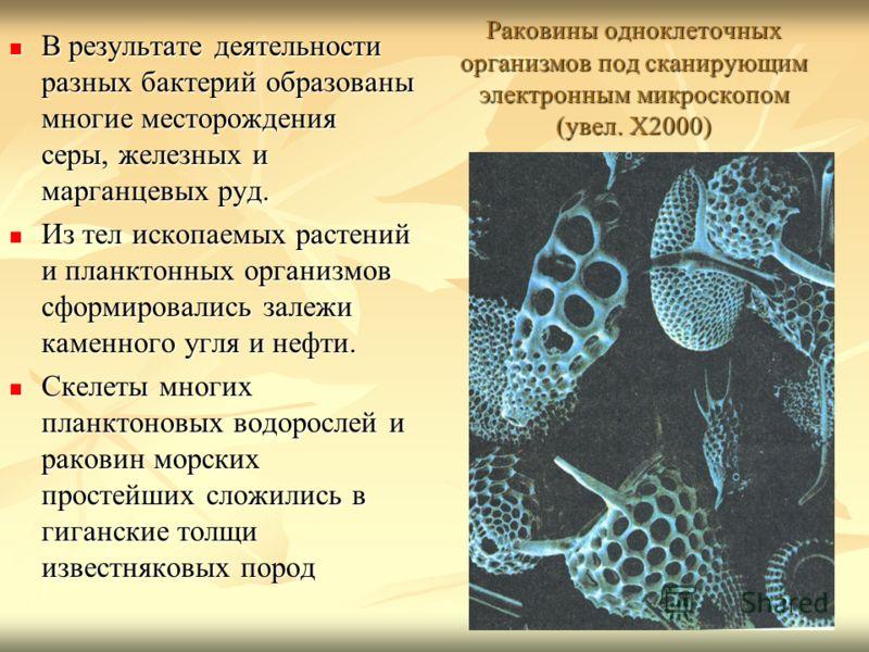 Раковины одноклеточных организмов под сканирующим электронным микроскопом (увел. Х2000) В результате деятельности разных бактерий образованы многие месторождения серы, железных и марганцевых руд. В результате деятельности разных бактерий образованы м