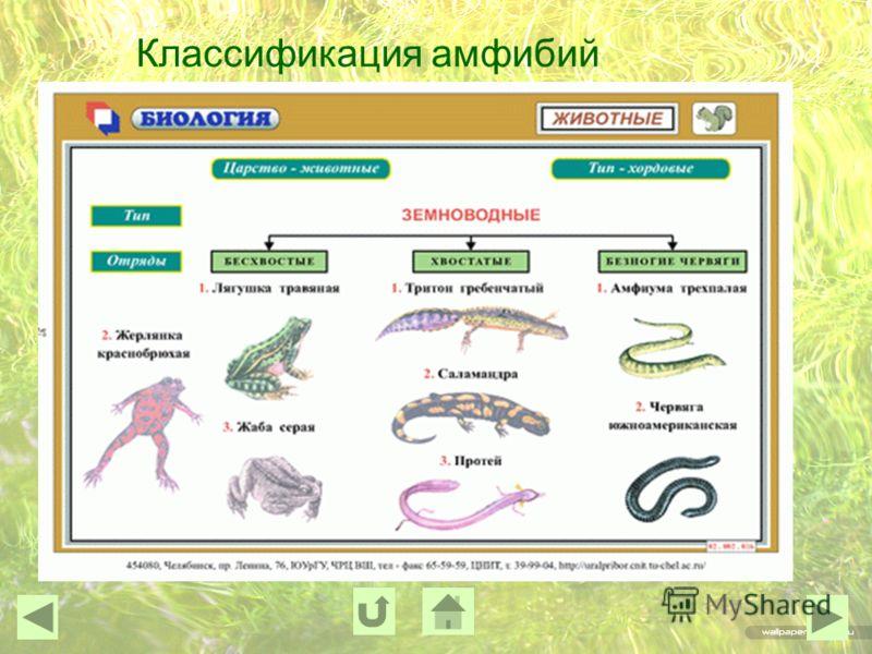 Классификация амфибий