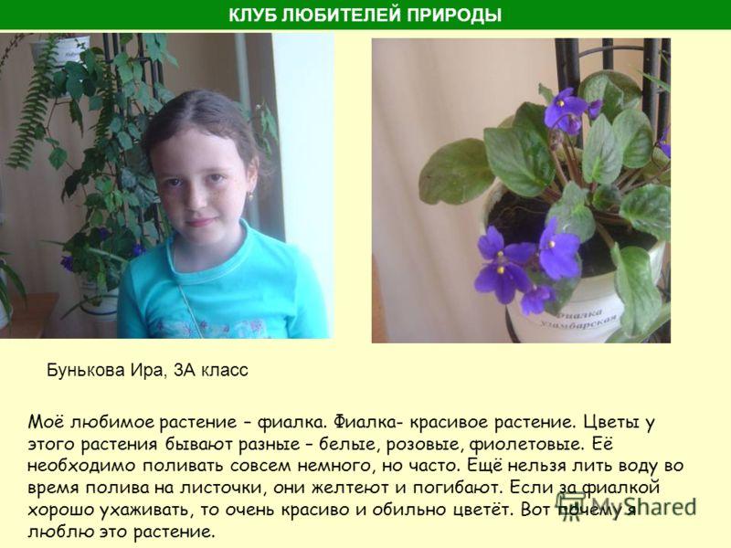 Бунькова Ира, 3А класс Моё любимое растение – фиалка. Фиалка- красивое растение. Цветы у этого растения бывают разные – белые, розовые, фиолетовые. Её необходимо поливать совсем немного, но часто. Ещё нельзя лить воду во время полива на листочки, они