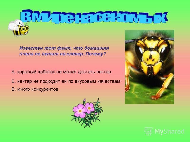Известен тот факт, что домашняя пчела не летит на клевер. Почему? А. короткий хоботок не может достать нектар Б. нектар не подходит ей по вкусовым качествам В. много конкурентов