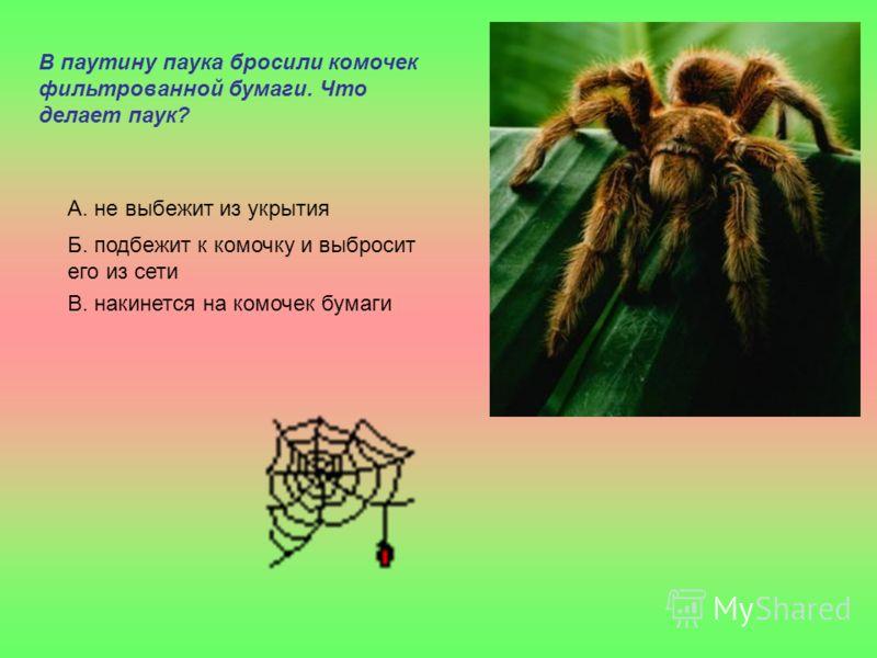В паутину паука бросили комочек фильтрованной бумаги. Что делает паук? А. не выбежит из укрытия Б. подбежит к комочку и выбросит его из сети В. накинется на комочек бумаги