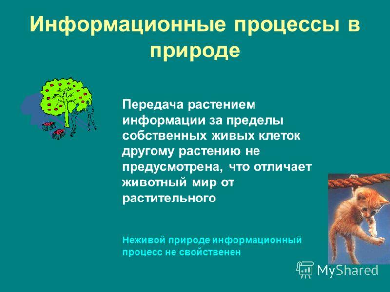 Информационные процессы в природе Передача растением информации за пределы собственных живых клеток другому растению не предусмотрена, что отличает животный мир от растительного Неживой природе информационный процесс не свойственен