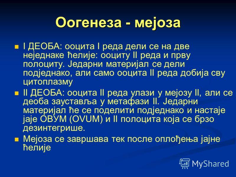 Оогенеза - мејоза I ДЕОБА: ооцита I реда дели се на две неједнаке ћелије: ооциту II реда и прву полоциту. Једарни материјал се дели подједнако, али само ооцита II реда добија сву цитоплазму II ДЕОБА: ооцита II реда улази у мејозу II, али се деоба зау