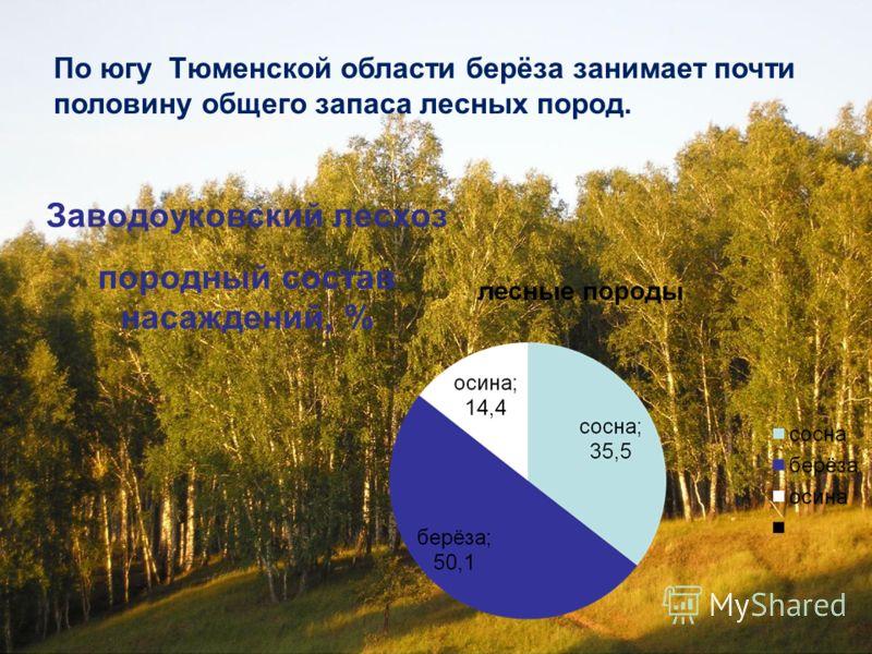 Заводоуковский лесхоз породный состав насаждений, % По югу Тюменской области берёза занимает почти половину общего запаса лесных пород.