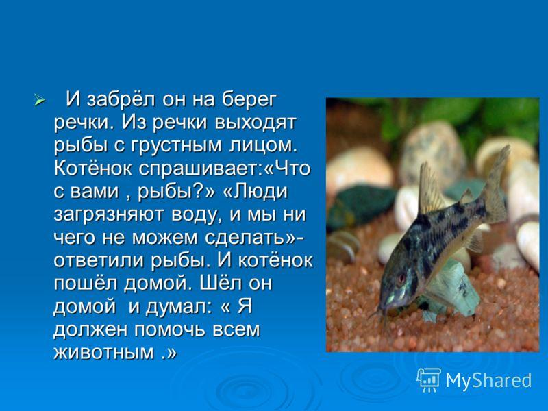 И забрёл он на берег речки. Из речки выходят рыбы с грустным лицом. Котёнок спрашивает:«Что с вами, рыбы?» «Люди загрязняют воду, и мы ни чего не можем сделать»- ответили рыбы. И котёнок пошёл домой. Шёл он домой и думал: « Я должен помочь всем живот