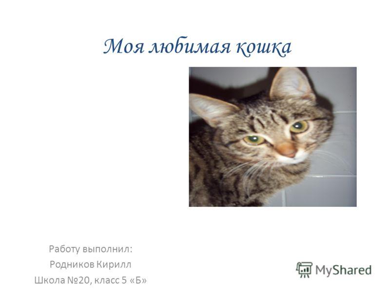 5 класс сочинение мой кот