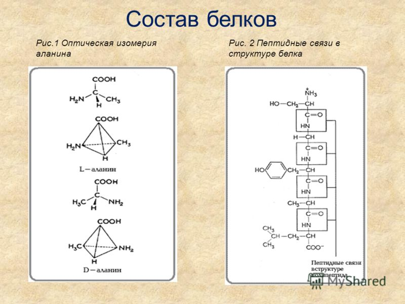 Состав белков Рис.1 Оптическая изомерия аланина Рис. 2 Пептидные связи в структуре белка