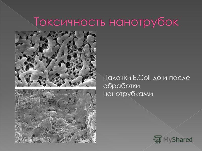Палочки E.Coli до и после обработки нанотрубками