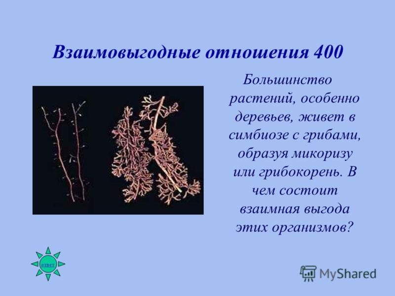 Взаимовыгодные отношения 400 Большинство растений, особенно деревьев, живет в симбиозе с грибами, образуя микоризу или грибокорень. В чем состоит взаимная выгода этих организмов? ответ