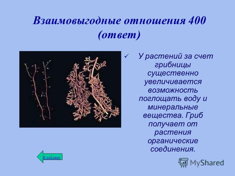 Взаимовыгодные отношения 400 (ответ) У растений за счет грибницы существенно увеличивается возможность поглощать воду и минеральные вещества. Гриб получает от растения органические соединения. В таблицу