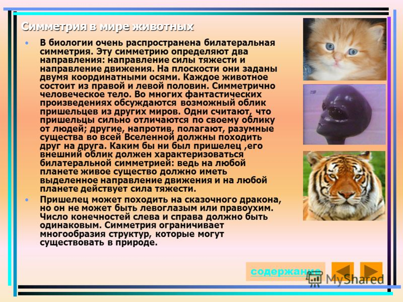 Симметрия в мире животных В биологии очень распространена билатеральная симметрия. Эту симметрию определяют два направления: направление силы тяжести и направление движения. На плоскости они заданы двумя координатными осями. Каждое животное состоит и