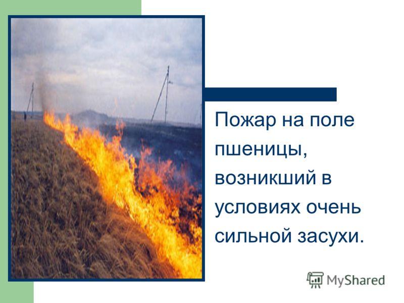 Пожар на поле пшеницы, возникший в условиях очень сильной засухи.
