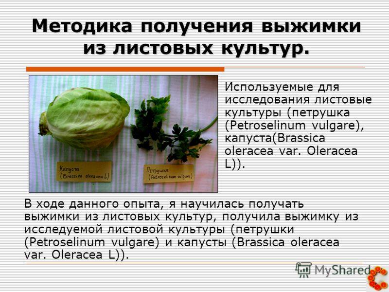 Методика получения выжимки из листовых культур. В ходе данного опыта, я научилась получать выжимки из листовых культур, получила выжимку из исследуемой листовой культуры (петрушки (Petroselinum vulgare) и капусты (Brassica oleracea var. Oleracea L)).