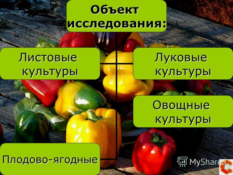 Объектисследования: ЛистовыекультурыЛуковыекультуры Овощныекультуры Плодово- ягодные