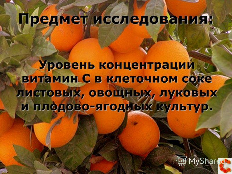 Предмет исследования: Уровень концентрации витамин С в клеточном соке листовых, овощных, луковых и плодово-ягодных культур.