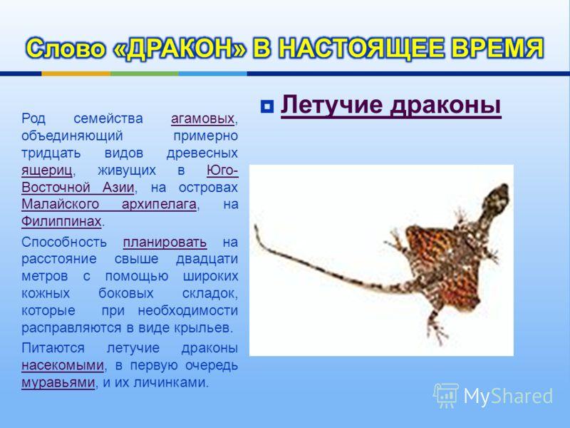 Летучие драконы Летучие драконы Род семейства агамовых, объединяющий примерно тридцать видов древесных ящериц, живущих в Юго - Восточной Азии, на островах Малайского архипелага, на Филиппинах. агамовых ящериц Юго - Восточной Азии Малайского архипелаг